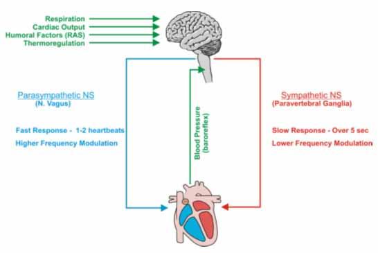 Heart Rate Variability basics